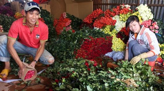 Hoa hồng Đà Lạt tăng giá lễ 20-10 ảnh 1