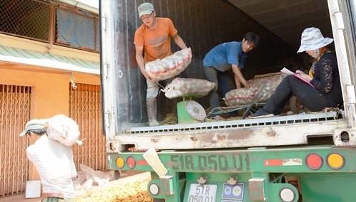 Cấm nhập khoai tây Trung Quốc về chợ nông sản Đà Lạt ảnh 1