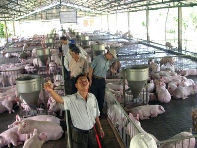 Xây dựng hàng rào kỹ thuật ngành chăn nuôi ảnh 1