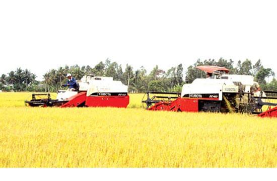 Gấp rút tái cơ cấu ngành lúa gạo ảnh 1