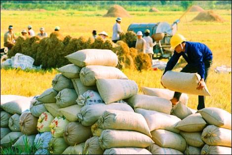 Vay WB 105 triệu USD chuyển đổi nông nghiệp bền vững ảnh 1