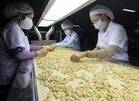 IPO Donafoods thu 55 tỷ đồng ảnh 1