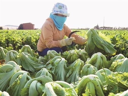 Đầu tư nông nghiệp: Miếng ngon hay khúc xương? ảnh 1