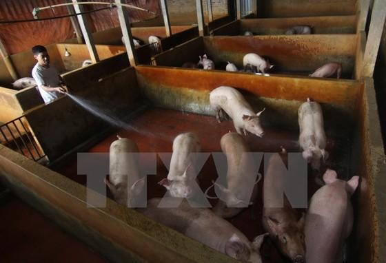 Phát hiện chất cấm trong thức ăn chăn nuôi ảnh 1