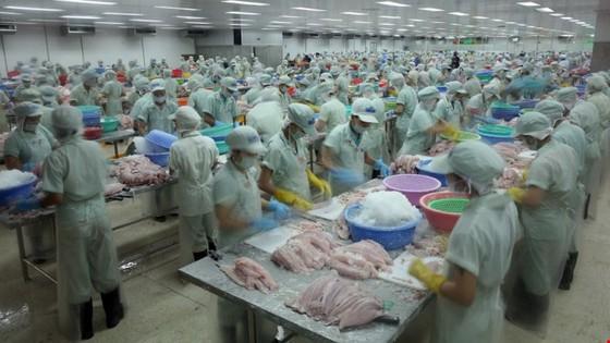 Doanh nghiệp cá tra Việt lại bị ép ảnh 1