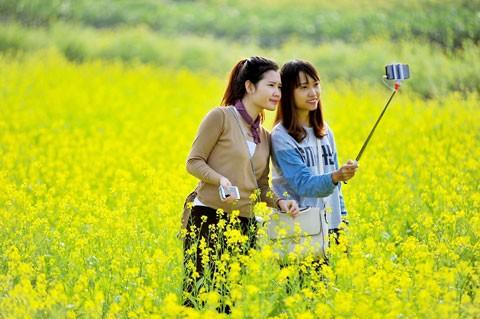 Cánh đồng hoa cải trong nắng đông ảnh 4