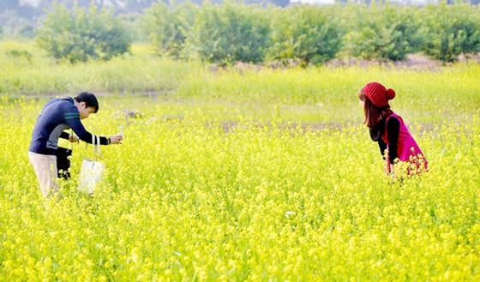 Cánh đồng hoa cải trong nắng đông ảnh 3