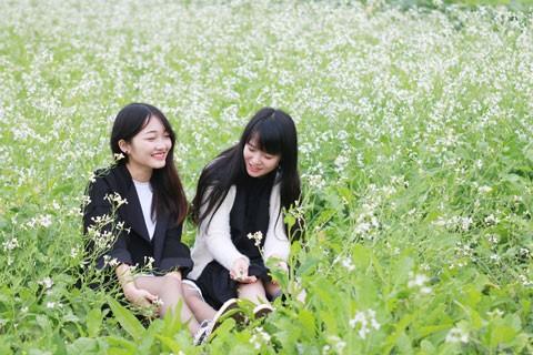 Cánh đồng hoa cải trong nắng đông ảnh 2