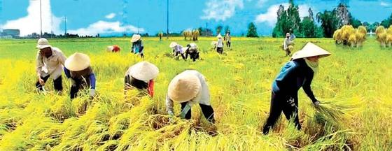 Sản lượng lúa gạo tăng hơn 200.000 tấn ảnh 1