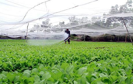 Chuyển đổi SX nông nghiệp ứng phó thiên tai ảnh 1