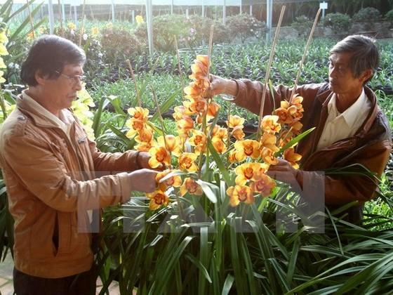 Tôn vinh 126 người trồng hoa Festival hoa Đà Lạt ảnh 1