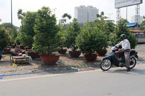 Trúng mùa mai, người Sài Gòn ăn tết lớn ảnh 1