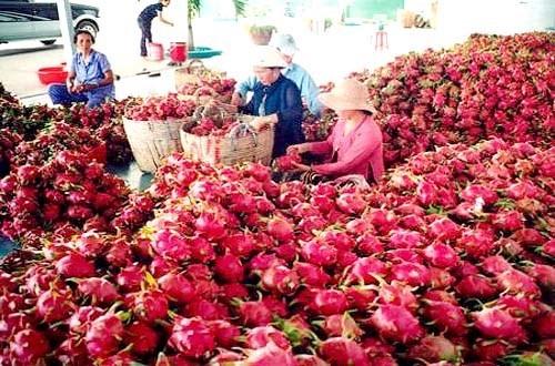 Thiết thực giúp nông dân có tết ảnh 1
