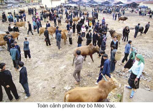 Độc đáo chợ bò Mèo Vạc ảnh 2