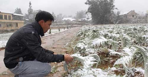 Mưa tuyết vùi lấp hàng tỷ đồng của nông dân ảnh 1