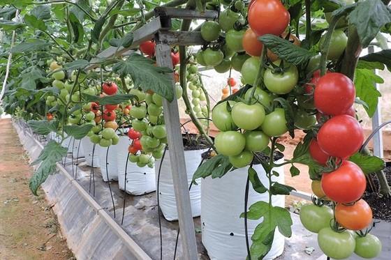 Xuất khẩu nông sản tháng 1 đạt 2,33 tỷ USD ảnh 1
