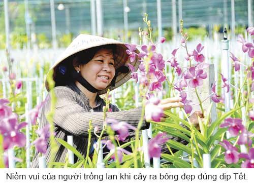 Làng hoa khoe sắc đón Xuân ảnh 4