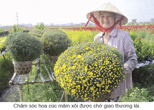 Làng hoa khoe sắc đón Xuân ảnh 5