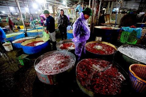 Cận cảnh chợ cá chép đỏ lớn nhất Hà Nội ảnh 5