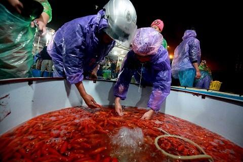 Cận cảnh chợ cá chép đỏ lớn nhất Hà Nội ảnh 4