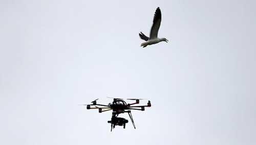 """Hà Lan dùng đại bàng để hạ drone """"cứng đầu"""" ảnh 1"""