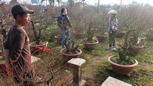 Những khu vườn bạc tỷ ở Nhật Tân ảnh 1