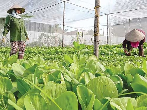 Gian nan nông nghiệp công nghệ cao ảnh 1
