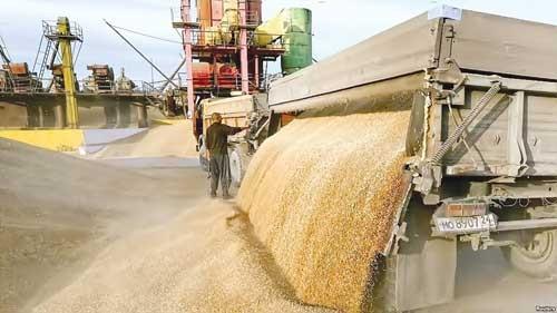 Nga - nhà xuất khẩu ngũ cốc số 1 thế giới ảnh 1
