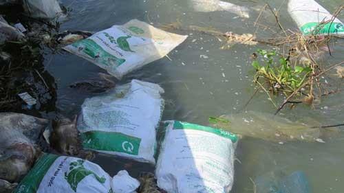Xác vịt chết la liệt trên sông Ba ảnh 1