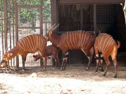 Vinpearl Safari phủ nhận tin cả ngàn thú quý hiếm chết ảnh 1