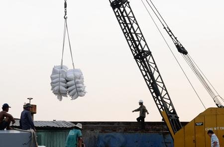 Tập trung giảm rủi ro cho xuất khẩu gạo ảnh 1
