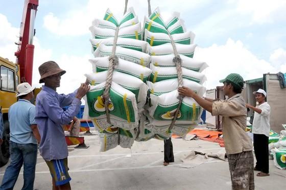 Xuất khẩu gạo tăng nhưng giá giảm sâu ảnh 1