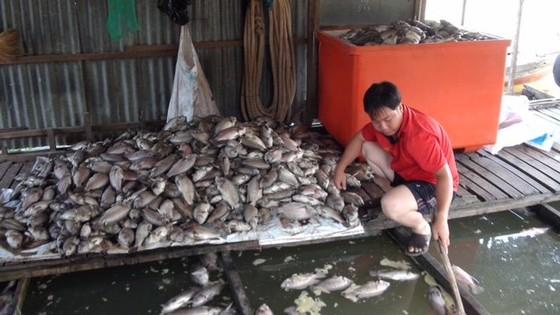 Cá chết sạch, không chỉ thiếu ôxy ảnh 1