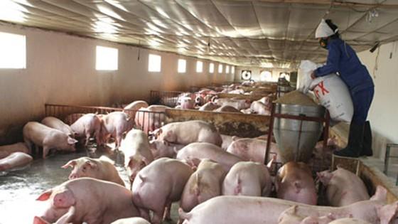 Chặn sử dụng kháng sinh trong chăn nuôi ảnh 1