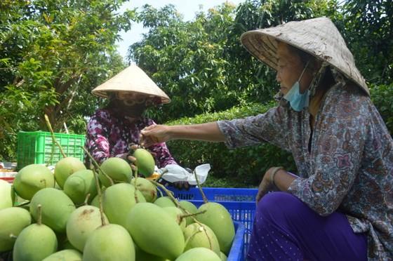 Hàn Quốc thích xoài, thơm Việt Nam ảnh 1