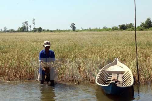 Khẩn cấp cứu 110.000ha cây ăn trái và lúa ảnh 1