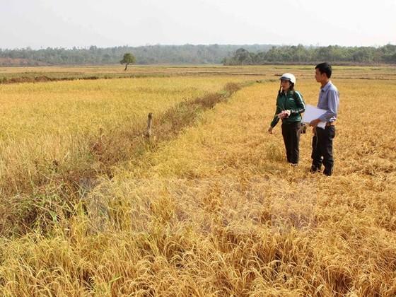 Khởi động dự án nông nghiệp thích ứng biến đổi khí hậu ảnh 1
