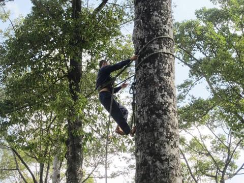 Ngày 26-3: Chặt hàng cây cổ thụ đường Tôn Đức Thắng ảnh 1