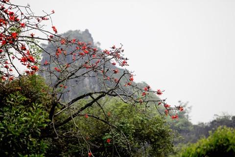 Chùa Hương mùa hoa gạo nở ảnh 5