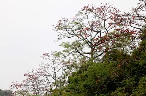 Chùa Hương mùa hoa gạo nở ảnh 2