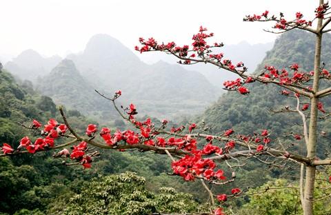 Chùa Hương mùa hoa gạo nở ảnh 3