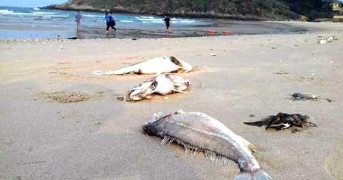 Khuyến cáo không ăn cá chết bất thường ảnh 1