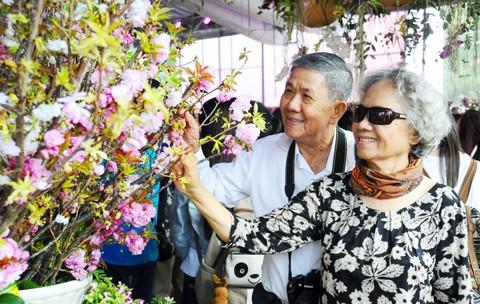 TPHCM háo hức ngắm hoa anh đào ảnh 6