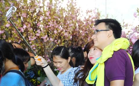 TPHCM háo hức ngắm hoa anh đào ảnh 3