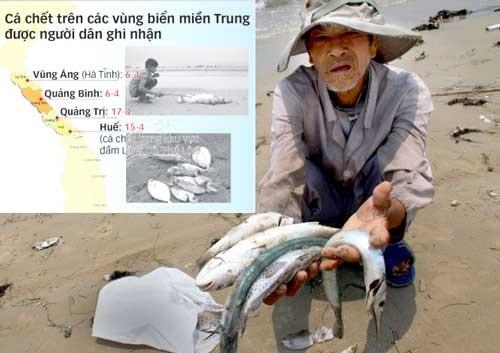 Tìm nguyên nhân cá chết dọc biển miền Trung ảnh 1