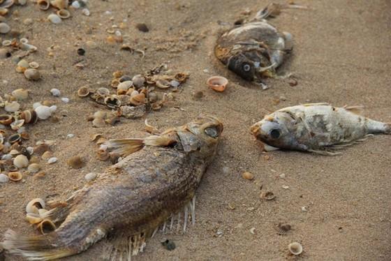 Formosa xả thải ra biển ảnh 1