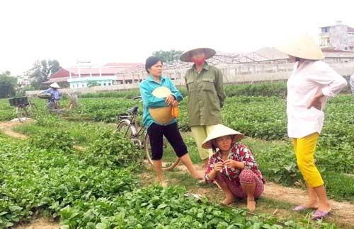 Thiệt hại nặng vì VTV dàn dựng clip, người trồng rau đòi bồi thường ảnh 1