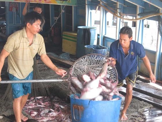 Thượng viện Hoa Kỳ hủy chương trình giám sát cá da trơn ảnh 1