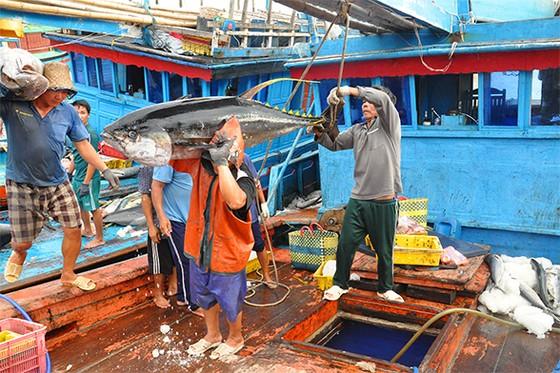Phát triển kinh tế biển: Cần lập bộ chuyên ngành ảnh 1