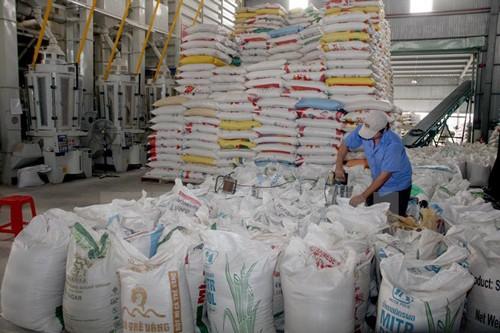 Giá lúa gạo ĐBSCL liên tục giảm mạnh ảnh 1